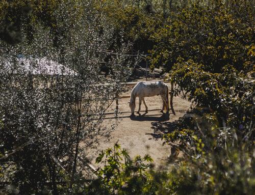 Paddocks en Málaga y bienestar del caballo